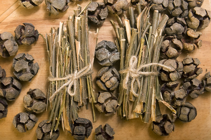 White willow bark medical herb, used in herbal medicine.